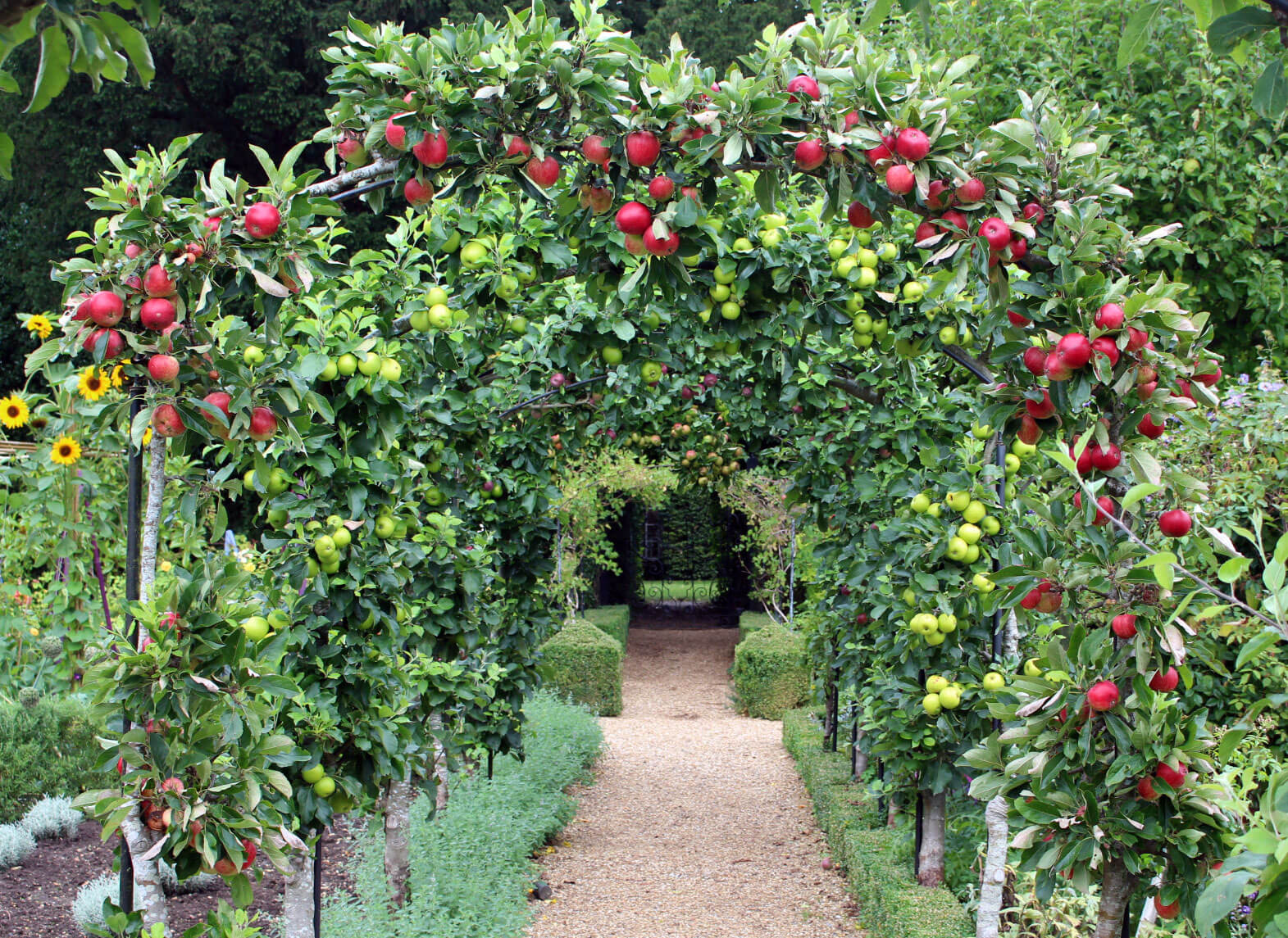 Apple-arches-August-2015