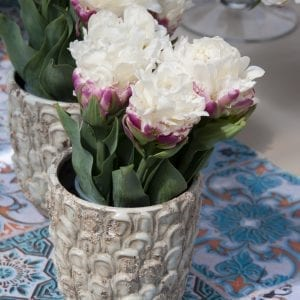 Coconut Ice Tulip Collection