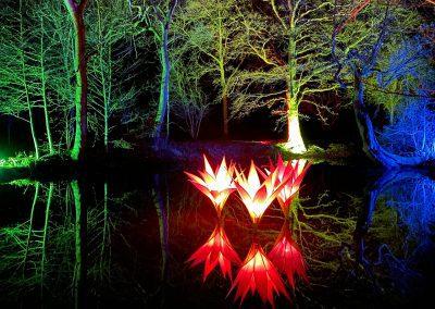 The Illuminated Garden